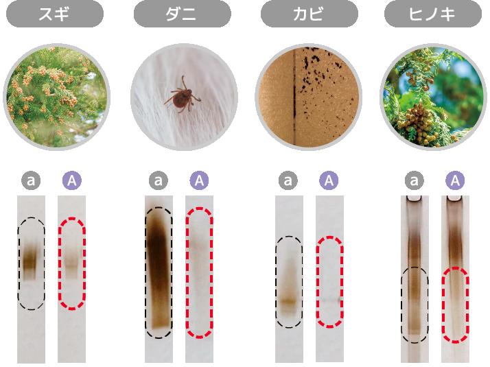 各環境アレルゲン(スギ・ダニ・カビ・ヒノキ)への効果を通常タイルとアレルピュアを比較した際、アレルピュアは通常タイルに比べて環境アレルゲンの成分が低減しました。