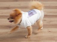 ペット(小型犬)のすべりに配慮